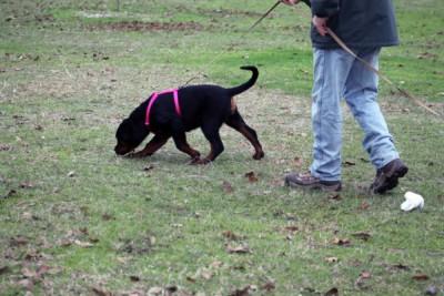 Tracking | American Rottweiler Club