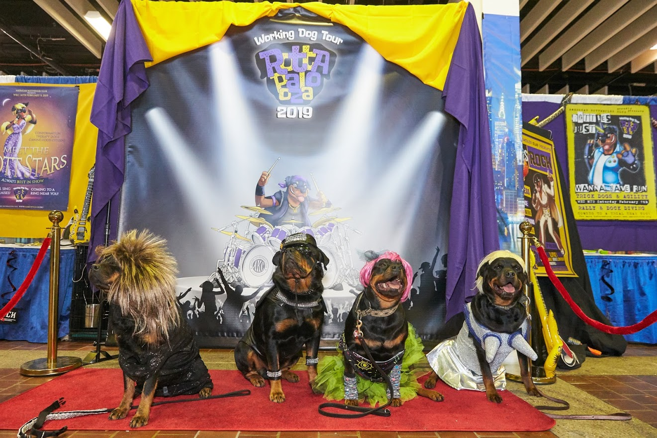 News | American Rottweiler Club